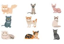 Aperçu sur les races de chats