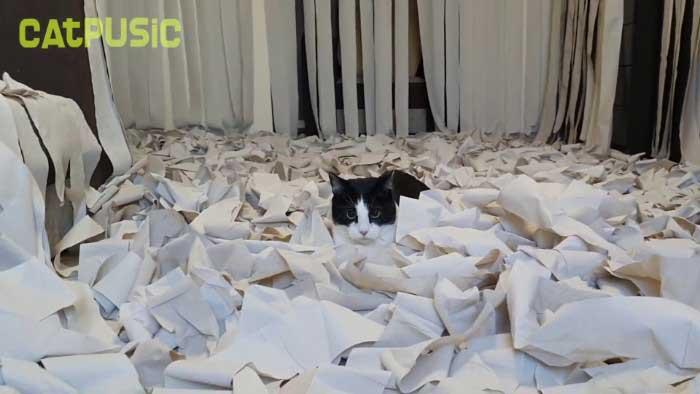 Pusic chat papier toilette