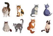 Quelle race de chat vous convient le mieux