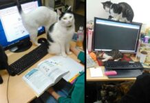 entreprise japonaise paie employés chat sauvé
