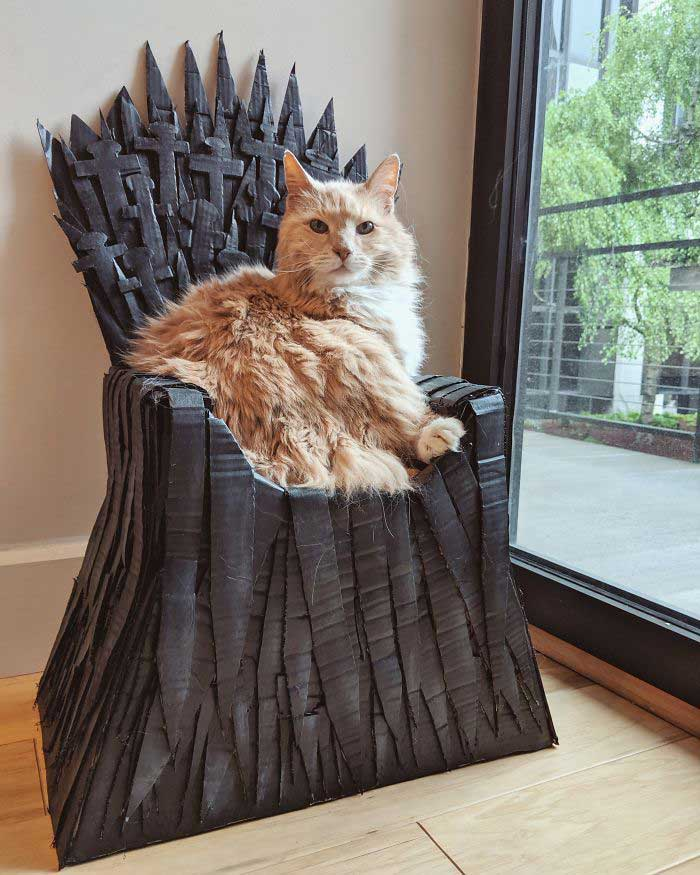 Arthur chat Maine Coon Game Of Thrones