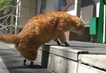 chat equipe quatre nouvelles pattes titane