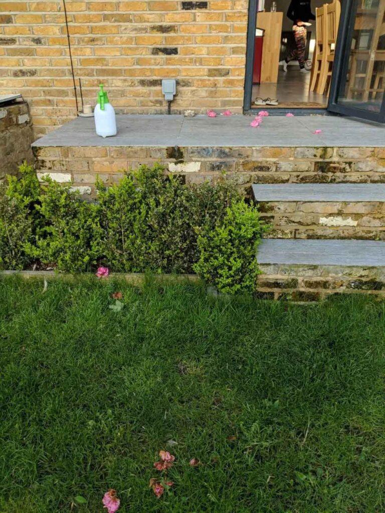 willow chat apporte fleurs jardin cadeau voisins