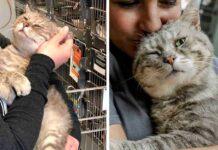 Ancien chat errant embrasse tout le monde