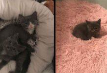 chaton né spécial The Odd Cat Sanctuary