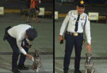 Danilo Reyeg agent sécurité centre commercial chiens errants