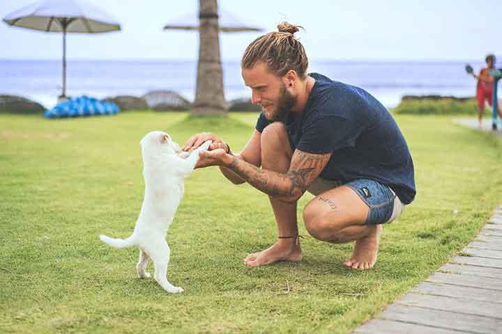 Parler chiens chats signe intelligence