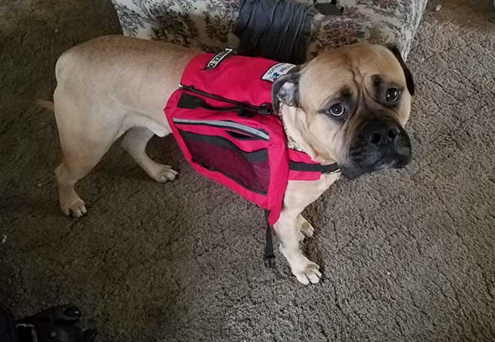 chien guide assistance