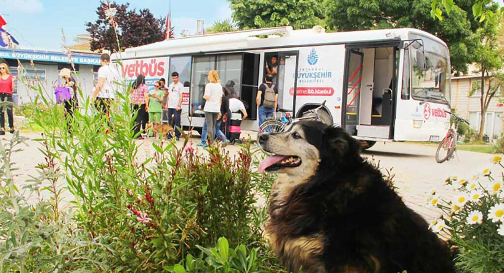 Vetbüs Istanbul Istanbul vétérinaires chiens chats errants
