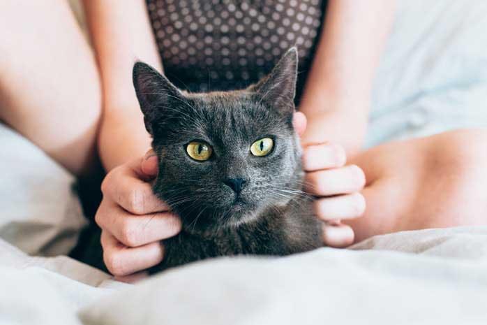 donneur de câlins pour chats professionnel
