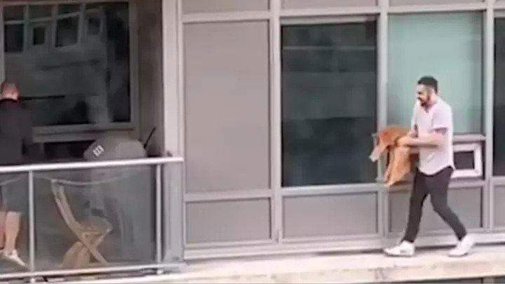 homme Toronto risque vie sauver chat