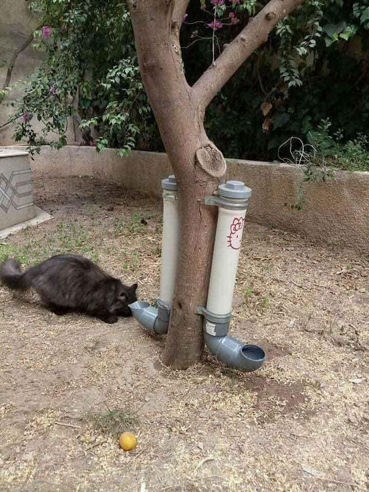 rifk guerre initiative nourrir chats errants Alep