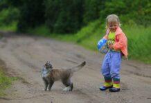 races chat enfants