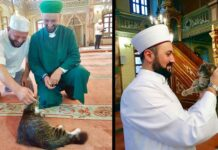 imam ouvre mosquée chats Mustafa Efe