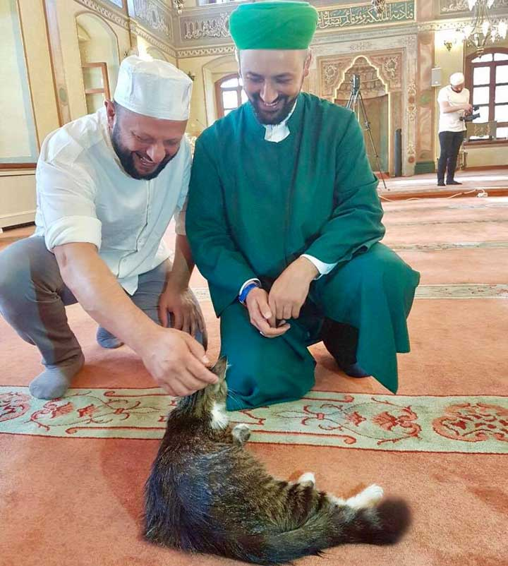 imam ouvre mosquée chats Mustafa Efe