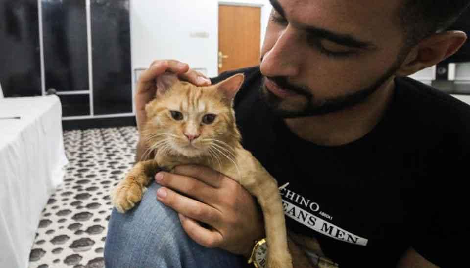 jeune irakien hôtel chats