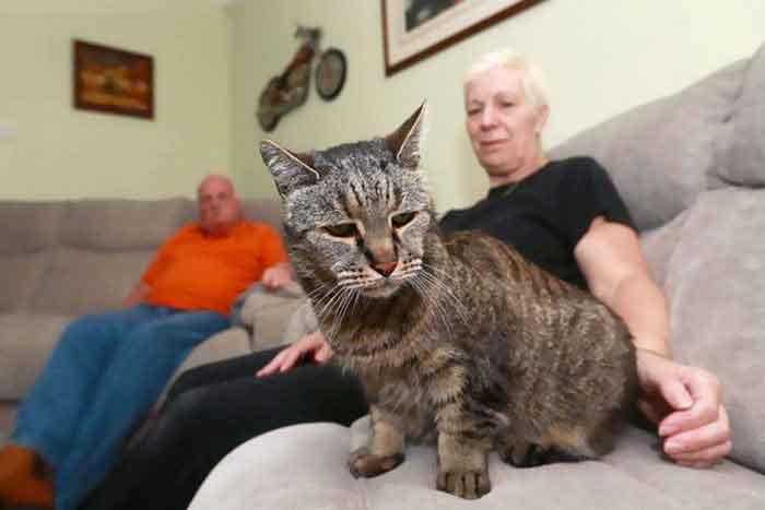 Nutmeg chat plus vieux monde