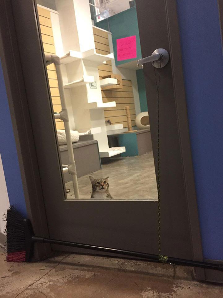 Quilty chat placé isolement aidé autres chats échapper