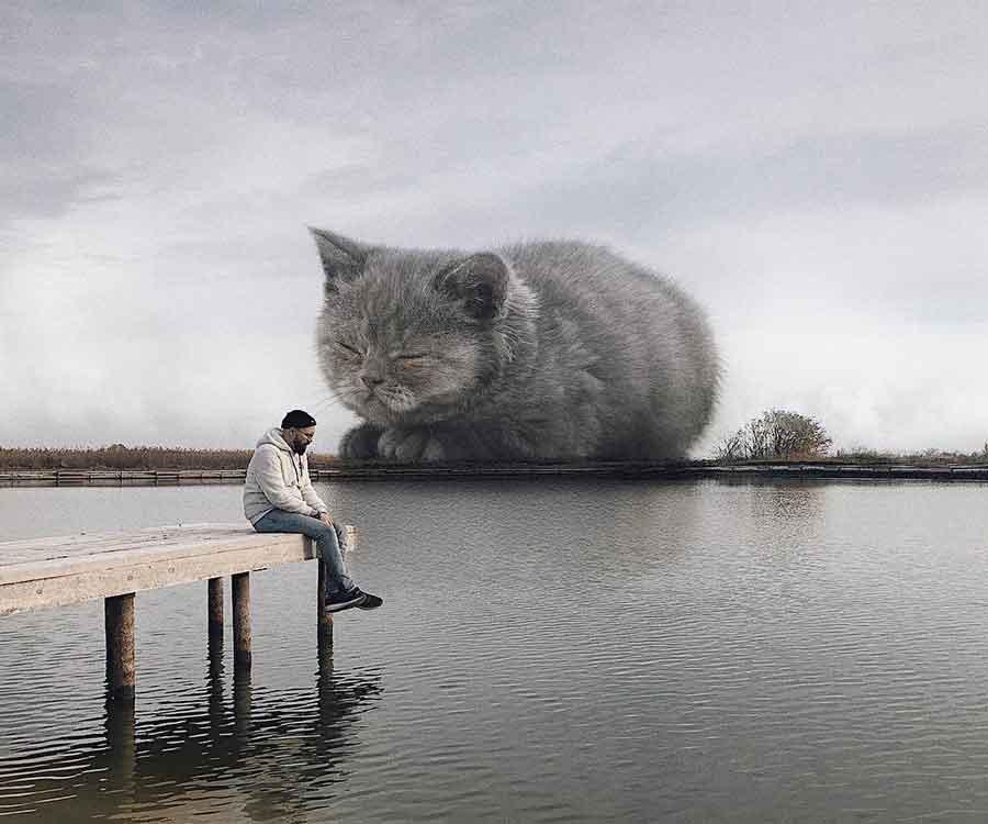 chats plus grands Andrey Scherbak