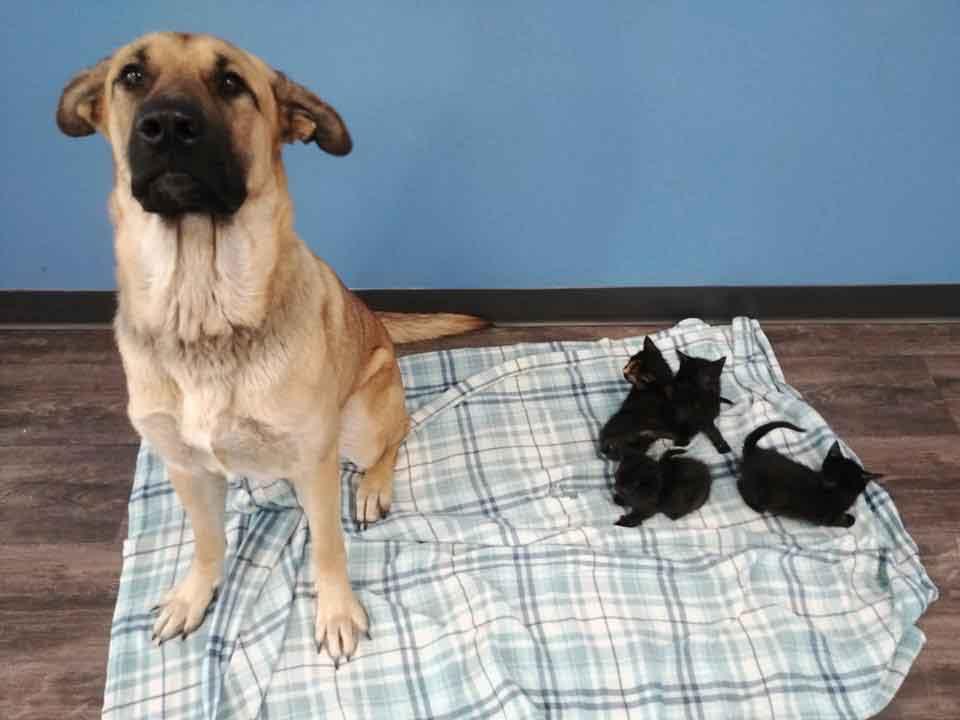 Serenity chienne errante sauvé chatons abandonnés