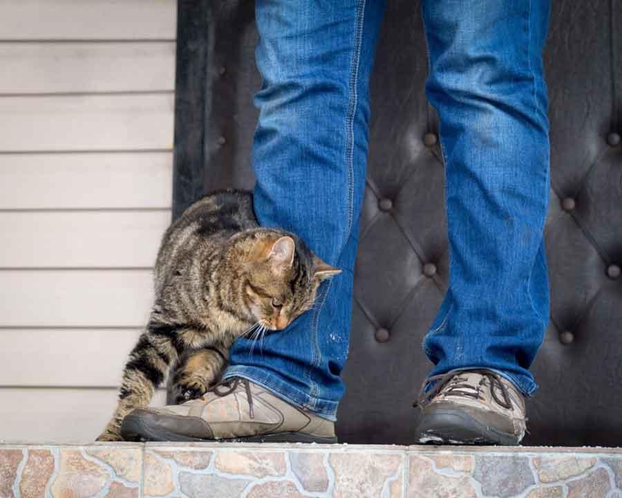 faits étonnants chat