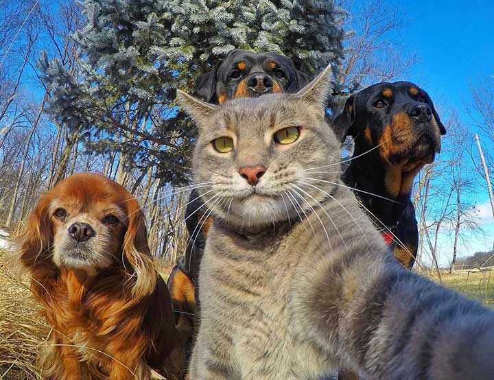 selfie chats chiens