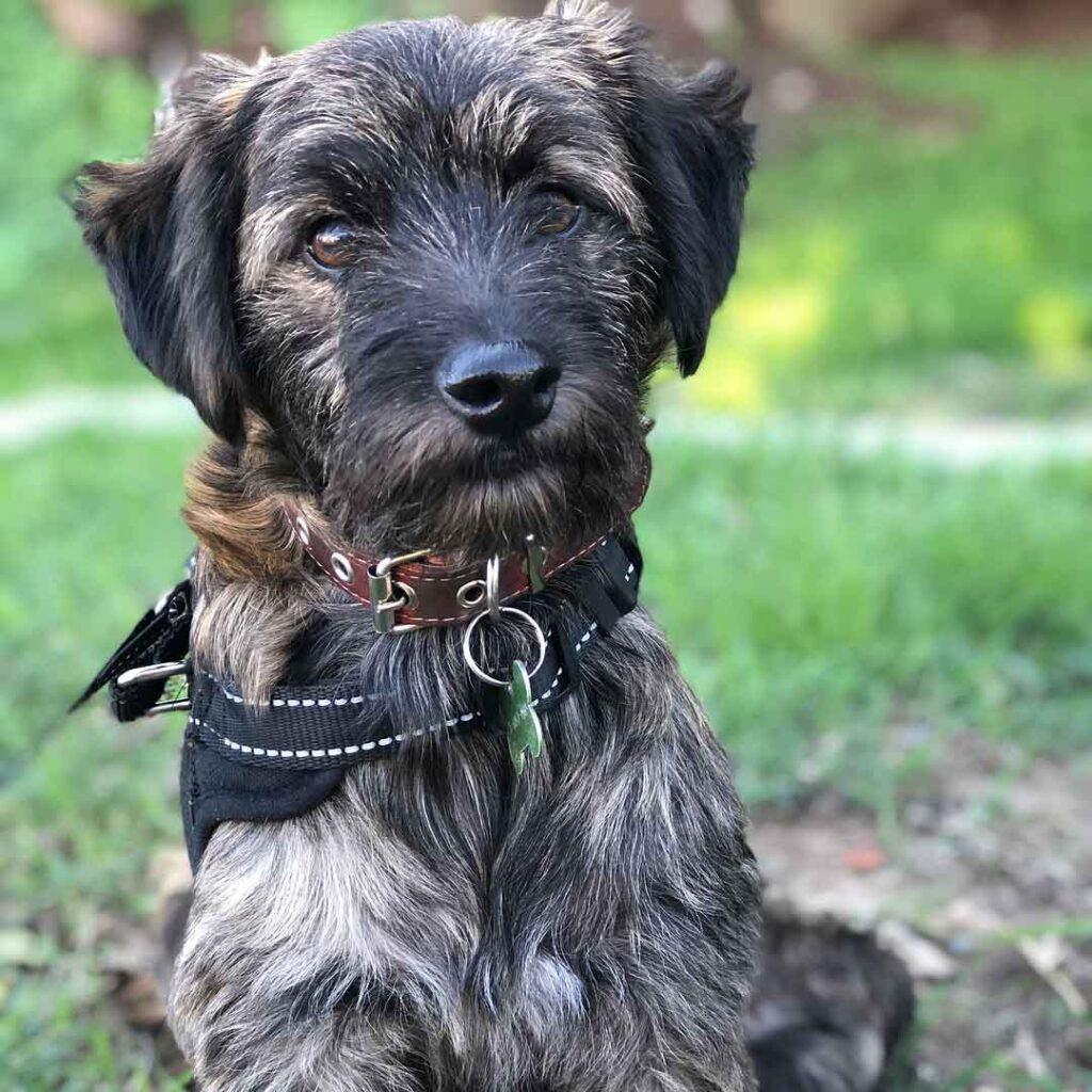Argentine Pia se bat sauver chien abandonné