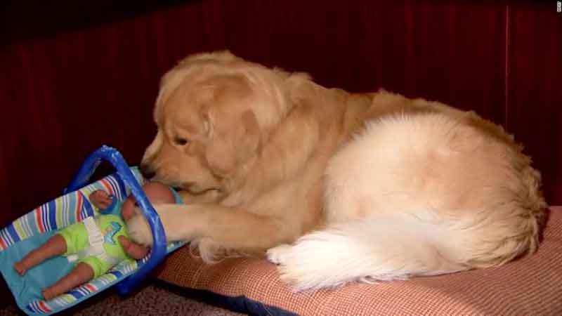 Ben Franklin chien policier surpris voler jouets