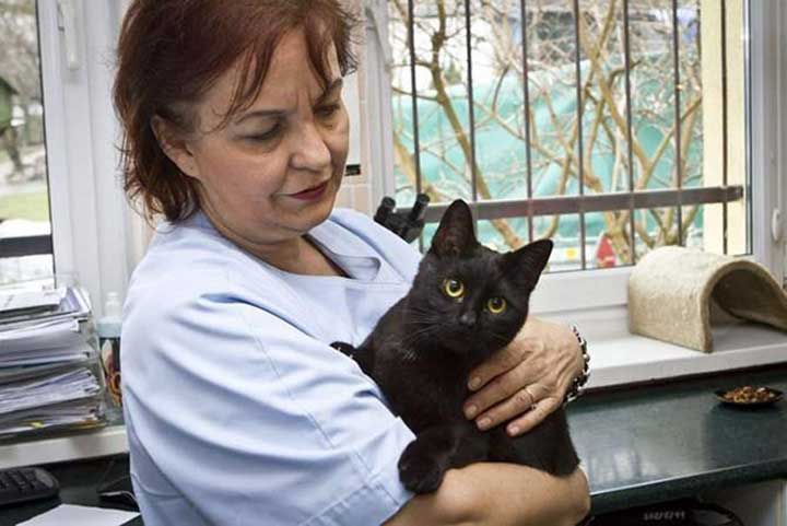 Pologne infirmière chat Radamenes animaux refuge