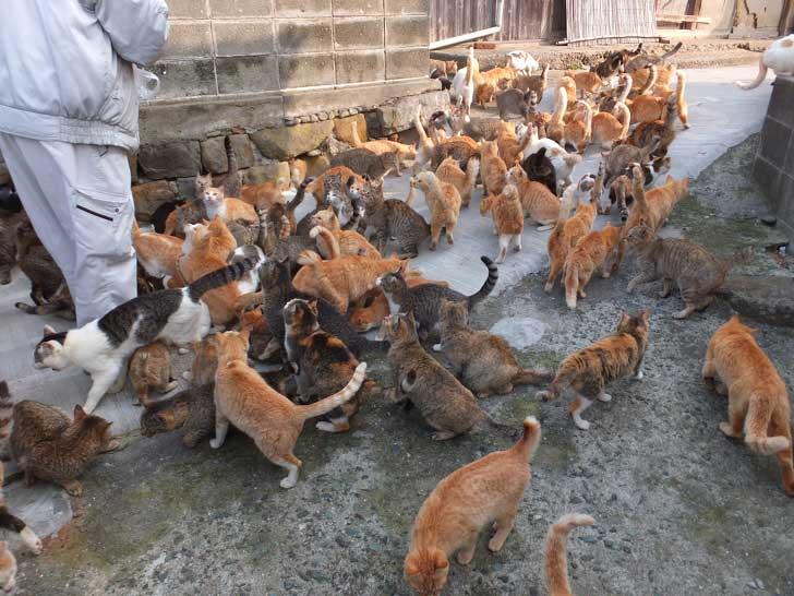 Preuves Japon paradis chats