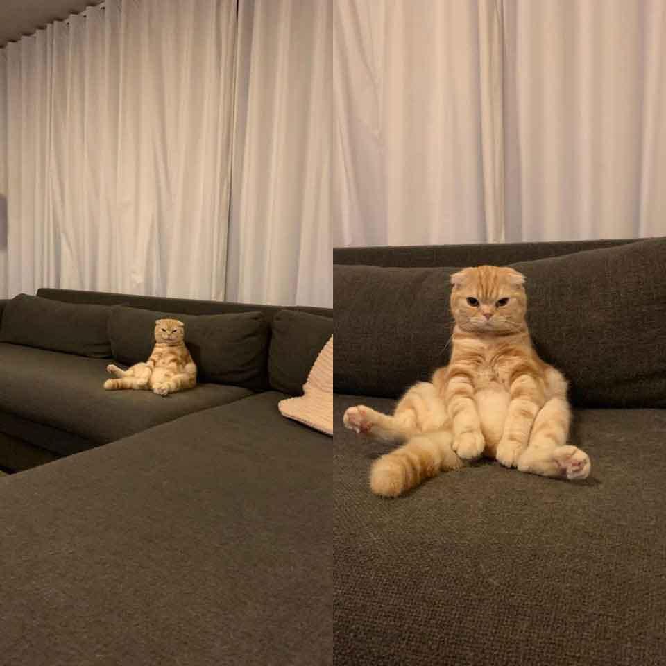 chiens chats maladroits