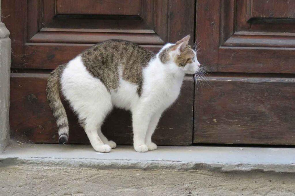 chat entrer chez vous