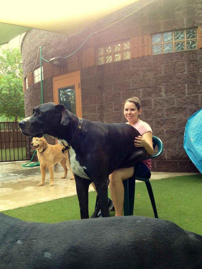 gros énormes chiens