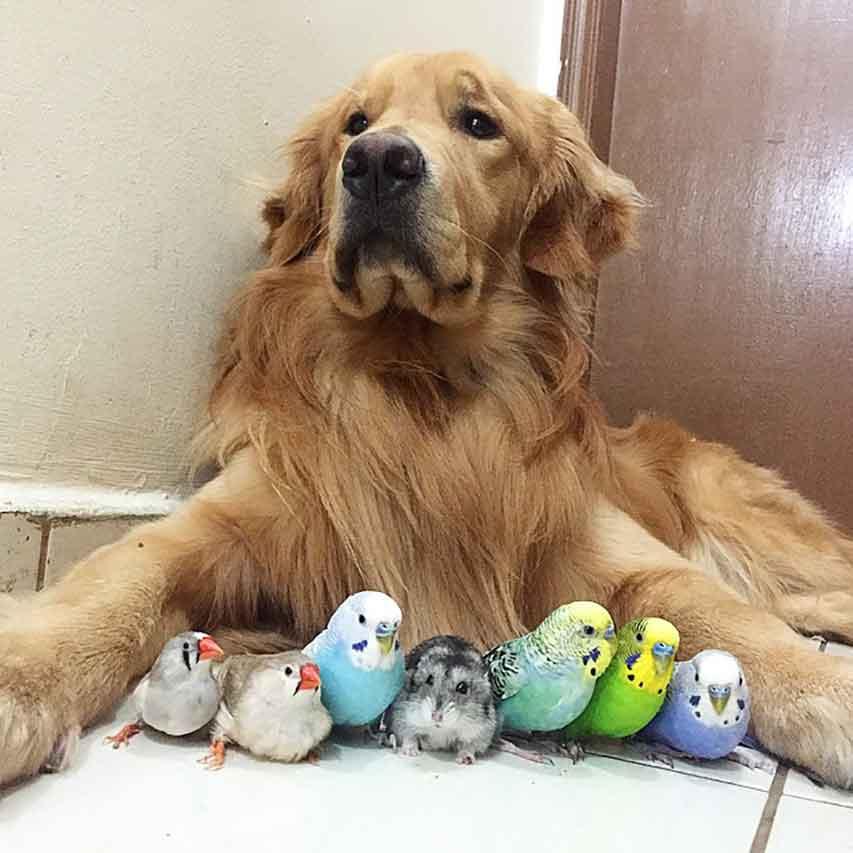 Chiens hamster 8 oiseaux meilleurs amis
