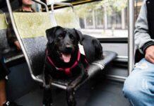 Eclipse chien monte seul bus aller parc