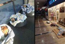 Grèce Turquie Brésil bénévoles chiens errants hiver