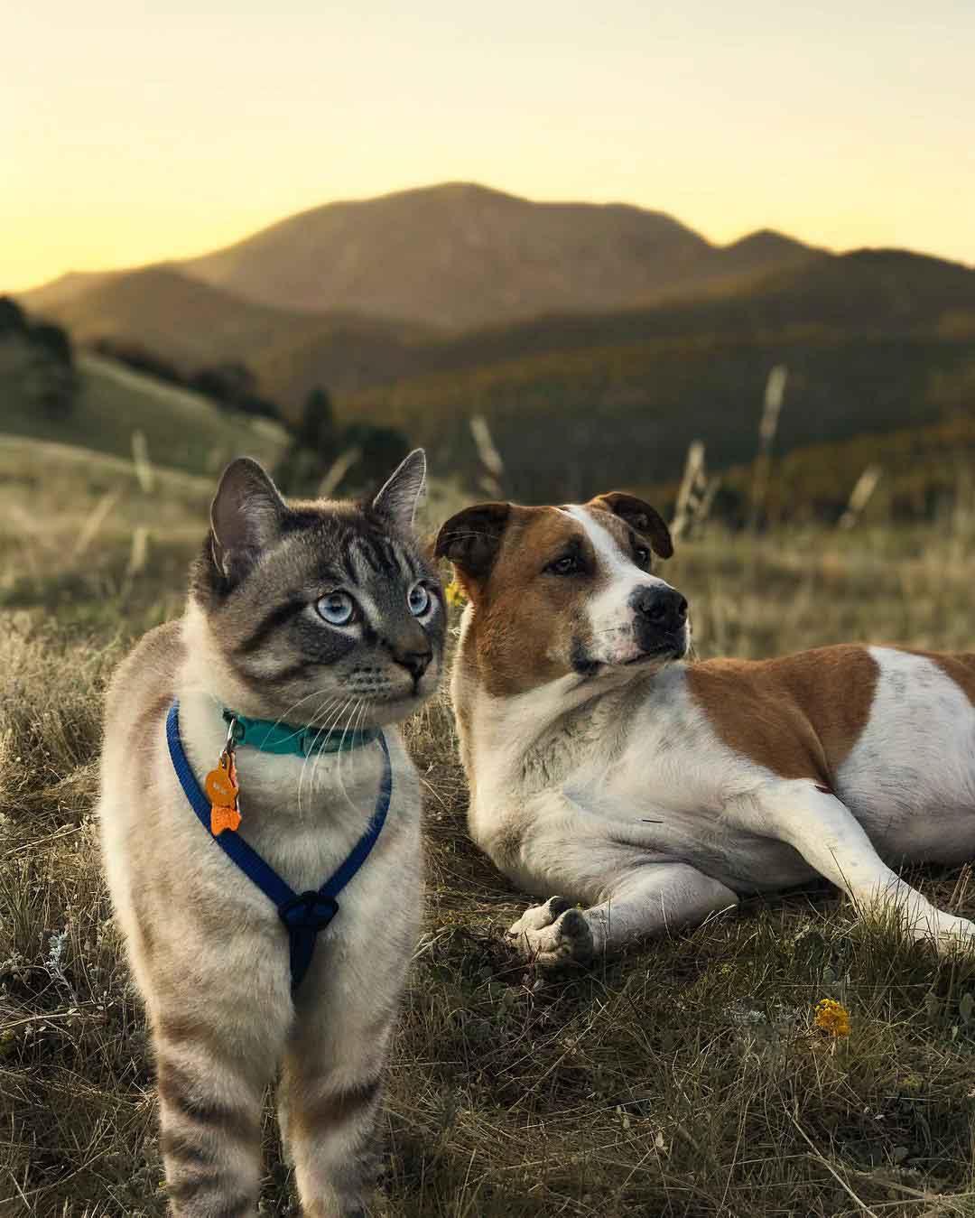 Henry Baloo chat chien adorent voyager ensemble