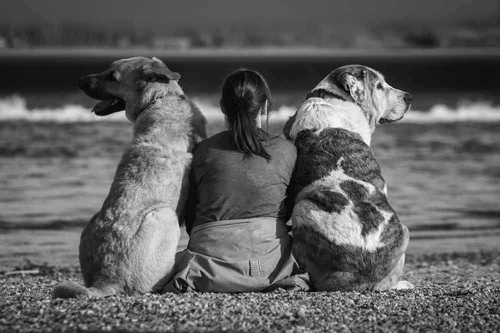 Perdre animal compagnie