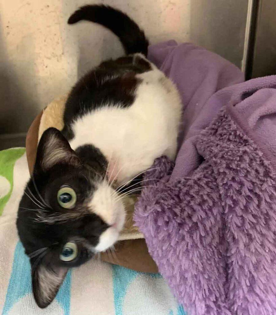 chat oreilles adorables sauvé baby yoda