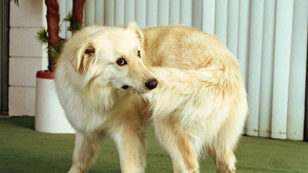 chien court après queue