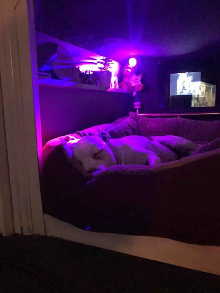 homme redonne confiance chien Buster créant boudoir