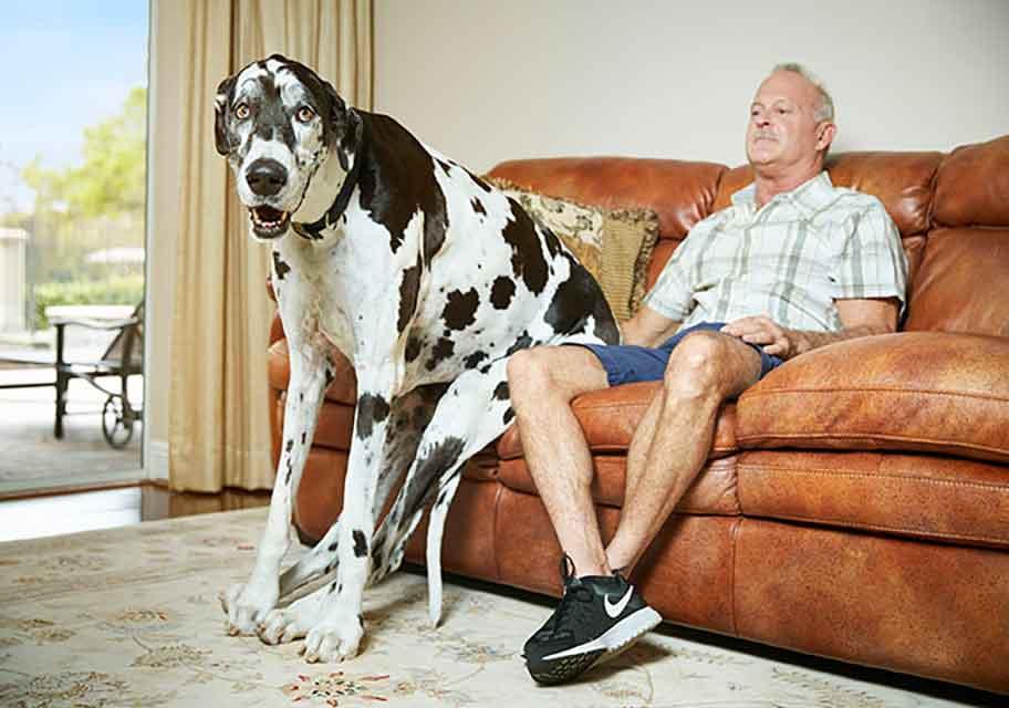 lizzy dogue allemand