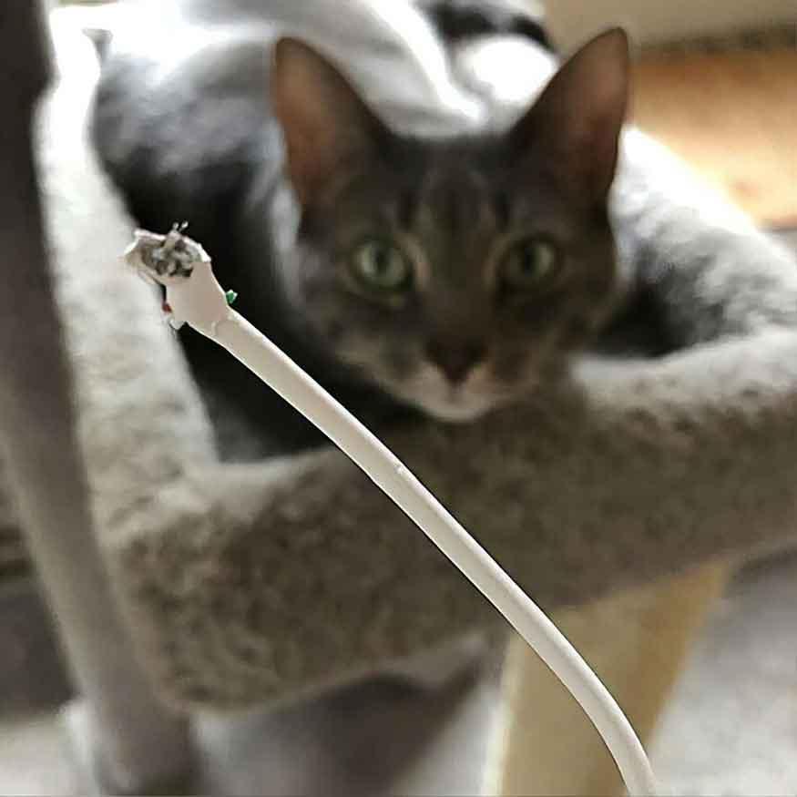 preuves chats maîtres maison