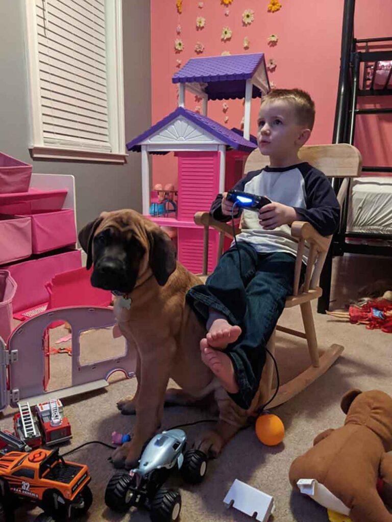 Peyton chien fidèle