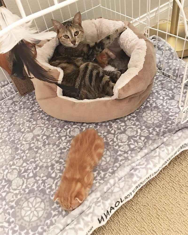 chat errant Alissa Smith retourne chatons refuge