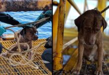 Chien trouvé et sauvé à 220 km de la côte