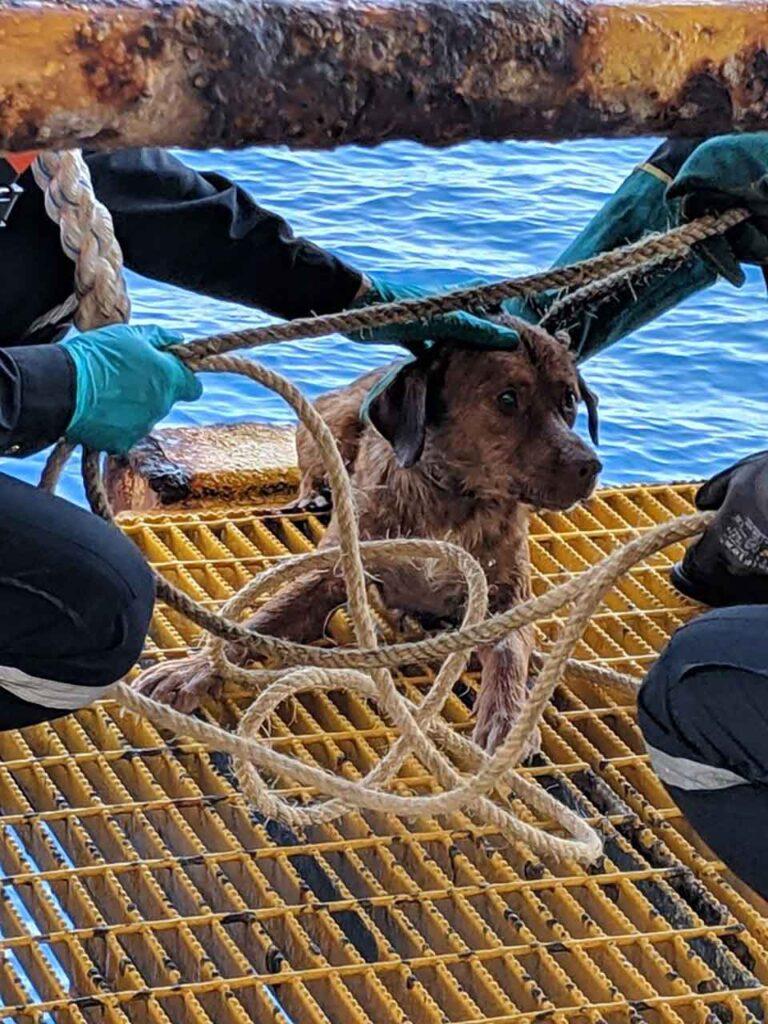 Vitisak Payalaw Chien retrouvé sauvé 220 km côte