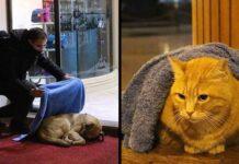 Yurtseven dentiste passe temps libre chiens chats hiver