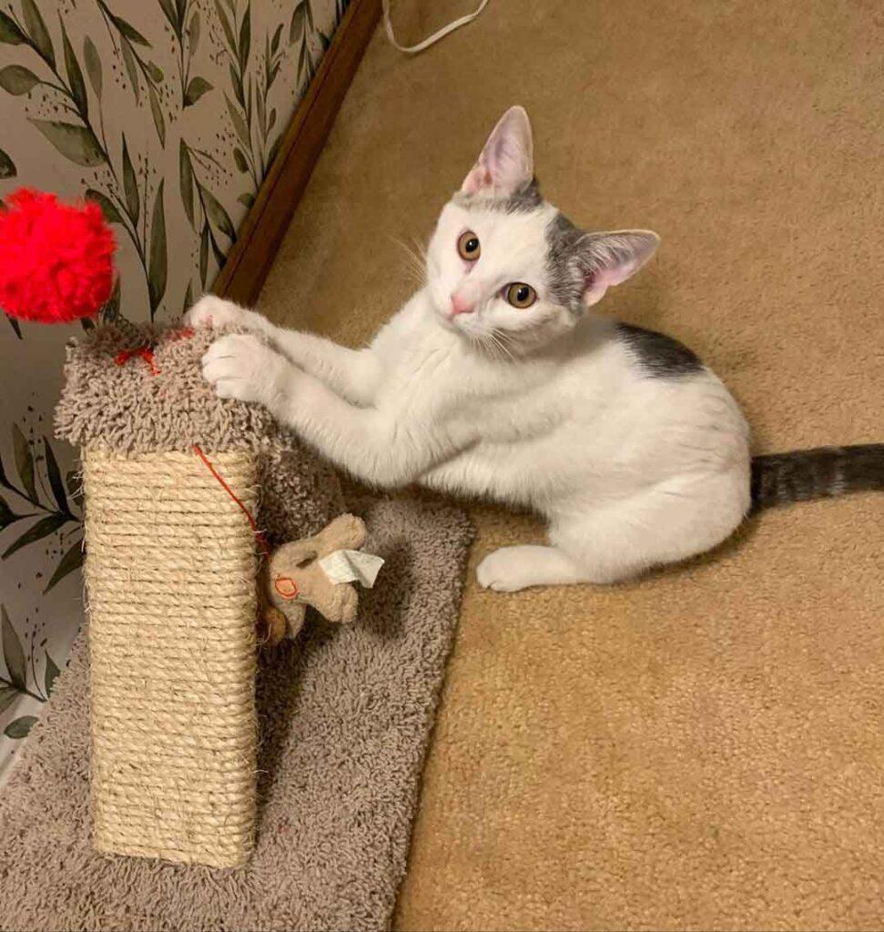 chien sauve chaton errant ferme Morgan Polly Paxton