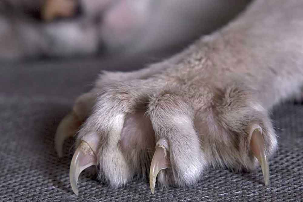 empêcher chat griffer canapé